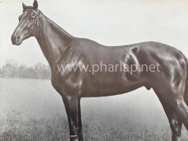 Phar  Lap se narodil  4. 10. 1926 na Timaru na Novém Zélandu.