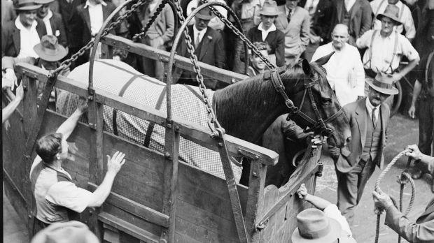Phar Lap při nakládání na loď, Melbourne 1932.