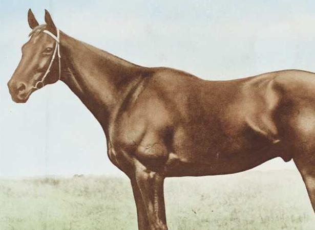 Phar Lap, 1931 (Archiv Alexandera Turnbulla, B-165-001)