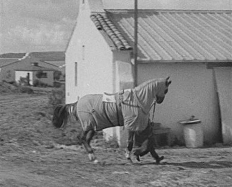 Tommy Woodcock vede Phar Lapa na tréninkovou dráhu v Aqua Caliente v roce 1932.